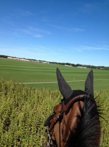 Wish we could gallop across the sod farm